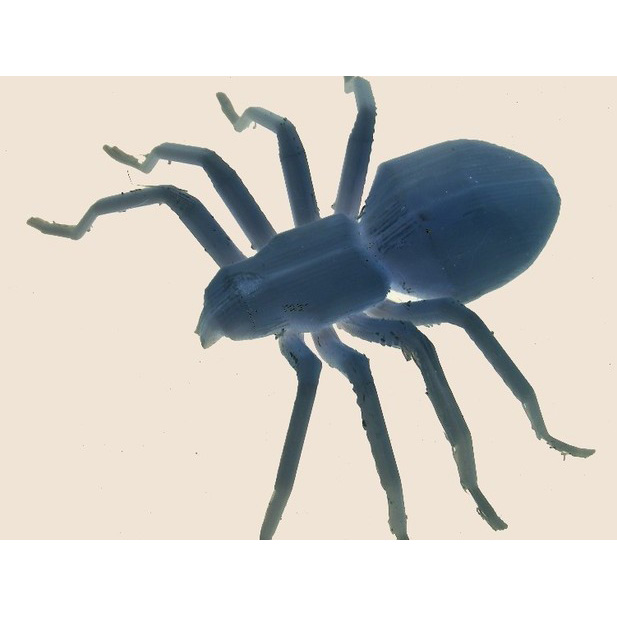 蜘蛛-爬行类动物